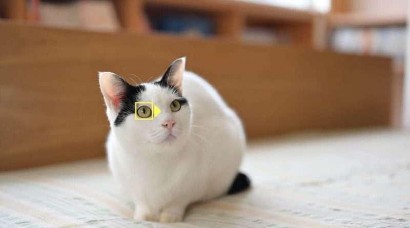 Nikon Animal Eye AF Firmware for Nikon Z7 and Z6